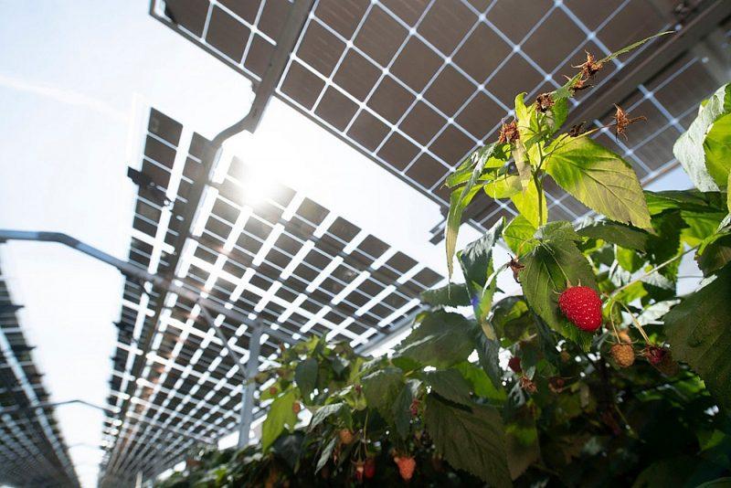 Pin mặt trời đặc biệt cho nông nghiệp được phát triển